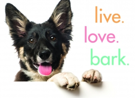 Jacket Image For: Live. Love. Bark.