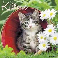 Jacket Image For: Just Kittens 2018 Wall Calendar