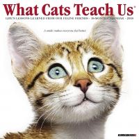 Jacket Image For: What Cats Teach Us 2018 Wall Calendar